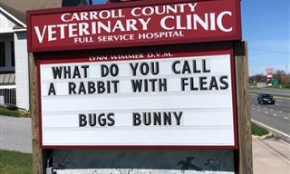 This Vet Clinic Puts Up the FUNNIEST Signs!