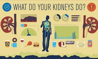 Your Kidneys Are So Vital - This is What You Need to Know