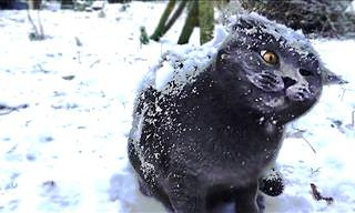 Cats and Snow Make For an Adorable Mix...