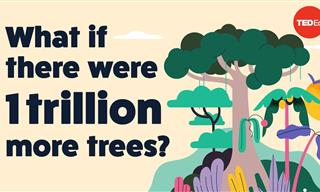 Could Planting Trillions of Trees Really Help the Planet?