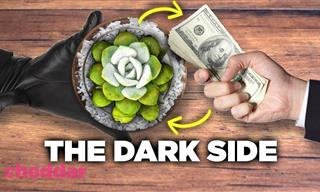 Why the Ever Growing Demand for Succulents is Dangerous