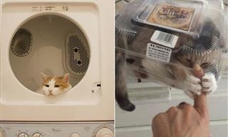 14 Hilarious Cats In Places They Have No Business To Be