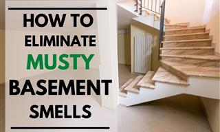 Get Rid of That Musty Basement Smell Once and For All
