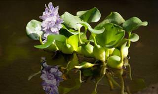 10 Exotic Underwater Plants