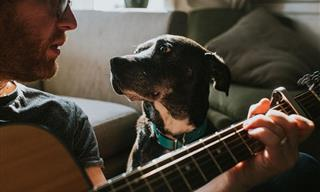These Stories Prove Why Having Pets is the Greatest Gift