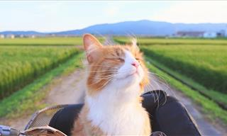 How to Be a Better Owner and Friend to You Cats