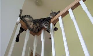 20 Cats Acting Like Complete Oddballs!