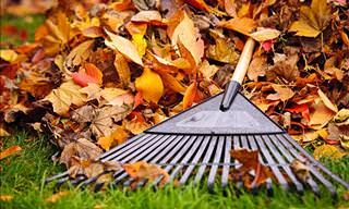 A Labor-Saving Tip to Help You Remove Fall Leaves from Your Lawn