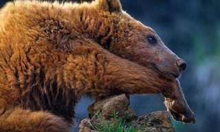 Stunning Animal Photography by Marina Cano