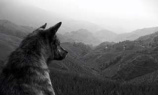 The Wolf's Law - Beautiful!