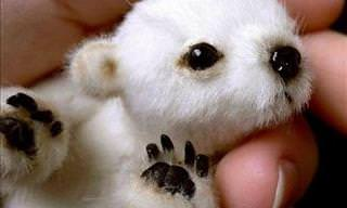 These Baby Animals Can All Fit In Your Hand