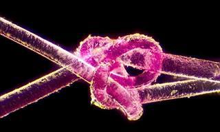 Stunning Microscope Photos That'll Amaze You