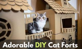 These Cute DIY Forts Are Perfect Habitats for Your Cats