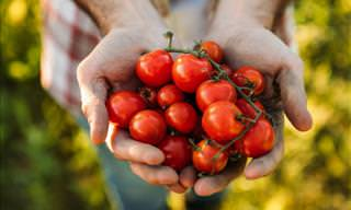 Tomatoes Have Anticancer Properties, BUT There's a Catch