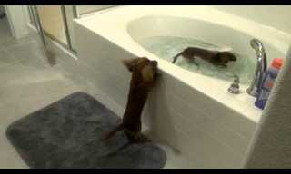 Not Every Dog Hates a Bath - Adorable!