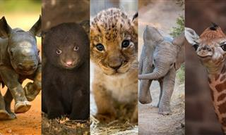 Adorable Baby Animals That You Will Want to Pet