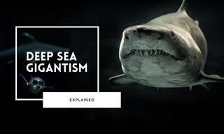 The Creepy World of the Deep Sea and Its Colossal Giants