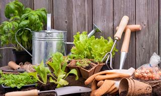 Now It's Official: Study Finds Gardening Makes You Happier