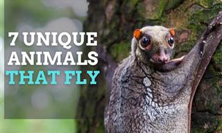 Flying Animals: Strange Creatures With Aerial Abilities