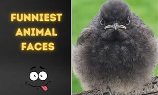 When Cute Animals Were Making Silly Faces – 15 Funny Pics