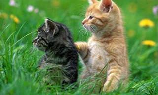 Ultimate Collection of Cat Breed Photos