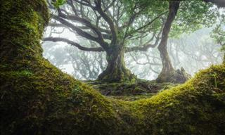 12 Glorious Views on the Ancient Forest of Madeira
