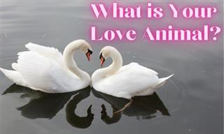 Test: What Animal Do You Love Like?