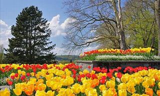 Let's Visit Mainau, The Flowering Island!