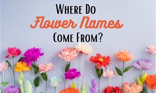 The Fascinating Origins of 11 Lovely Flower Names