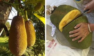 14 Exotic Fruit Packed With Nutrients