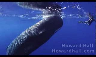 To Meet A Sperm Whale - Beautiful