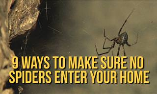 9 Ways to Ensure Spiders Won't Enter Your Home