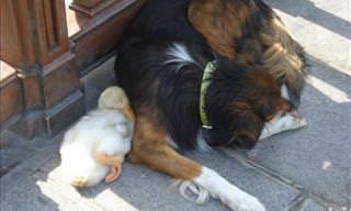 Adorable Animal Friendships