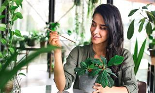 7 Common Indoor Plant Care Mistakes to Avoid