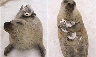 Animals Need Toys, Too! - 14 Heartwarming Photos