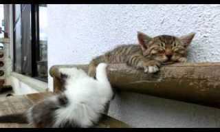 Wake Up Already! - Adorable!