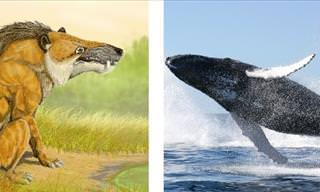 See How These 15 Animals Changed Over Time