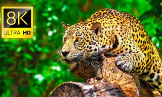 Enjoy This Colorful Wildlife Collection in Ultra HD