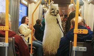 Adorable Animals Spotted On Public Transport