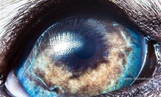 Gaze Into the Eyes of Animals Through Stunning Macro Shots