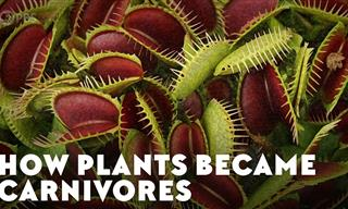 How Did the First Carnivorous Plants Appear on the Planet?