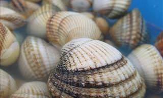 20 Different Types of Seashells and Freshwater Shells