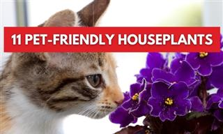 11 Non-Toxic Plants Perfect For Homes With Pets and Kids