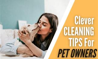 10 Handy Cleaning Tips Every Pet Owner Will Appreciate