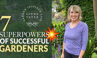 7 Basic Tips For a Successful Garden