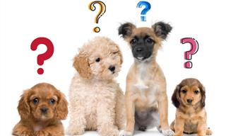 Test Your Knowledge of Dogs With This Puppy-Based Game