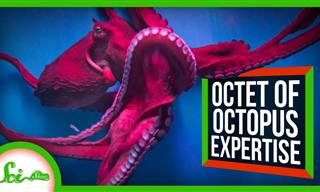 Here Are Some Cool Things You Can Learn From Octopuses