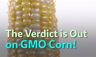 This is the Latest Verdict on GMO Corn