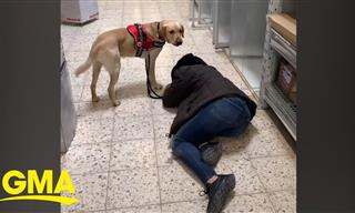 Diabetic Alert Dogs - How Can They Benefit Patients?