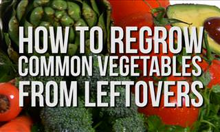 How to Regrow Common Vegetables from Leftovers